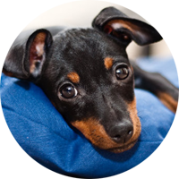 New Puppy Care Program in Burnaby BC | Hastings Veterinary Clinic