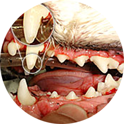 Cat Dental Care Services   Hastings Veterinary Clinic