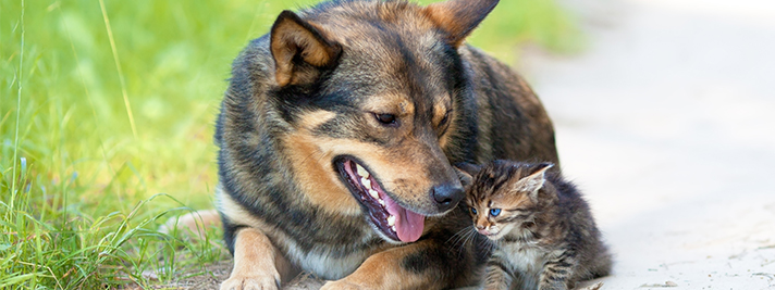 Cats & Dogs Have Allergies Too | Hastings Veterinary Clinic