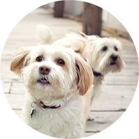 Guidelines for pet parenting and pet adoption   Hastings Veterinary Clinic
