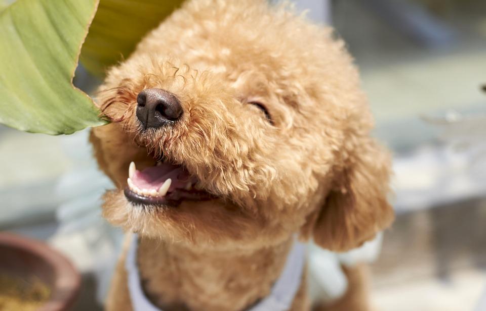fluffy smiling dog