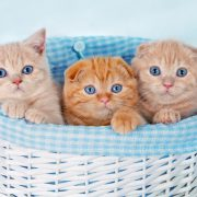 Three cute kittens in a basket