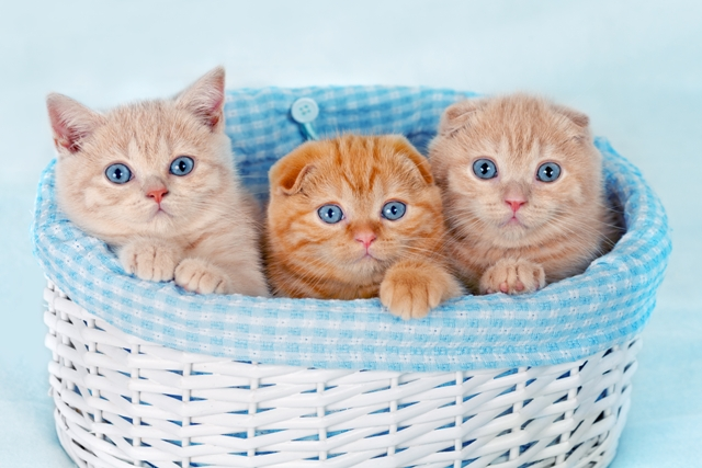 Three cute kittens in a basket
