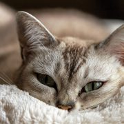 Relieve Kitty's Pain With Cat Arthritis Treatments