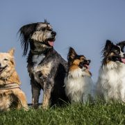 How to introduce a new pet into a multi-pet home