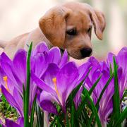 Flea Prevention Tips for Springtime