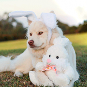 Why You Should Never Feed Your Dog Easter Chocolate