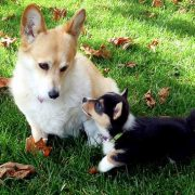 Ask an Expert: Puppy Contact   Hastings Veterinary Clinic