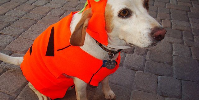 Tips for an Enjoyable Halloween Night for Pets | Hastings Veterinary Clinic