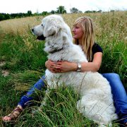 10 Outdoor Doggie Hazards to Stay Away From | Hastings Veterinary Hospital