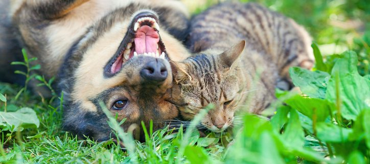 Beat the Heat with Our Summer Pet Care Advice! | Hastings Veterinary Hospital