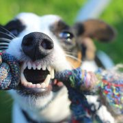 Dogs Need Dental Care Too! What to do for a Broken Tooth | Hastings Veterinary Clinic