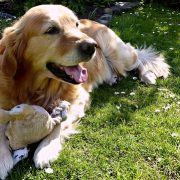Great Tips for Summertime Dog Flea and Cat Flea Control