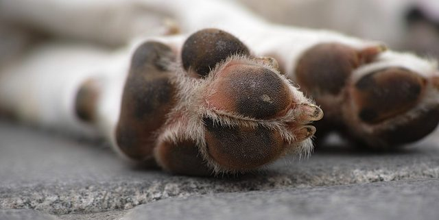 How to Protect Your Pets' Paws from Hot Sidewalks