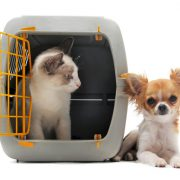 Pet Boarding vs. a Pet Sitter—Which is Better for my Pet?