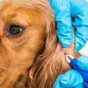 Pet Care Tips to Keep them Safe from Dangerous Tick Bites