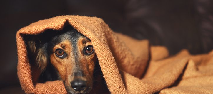 Pet Distress: How to Keep Pets Calm During Summer Activities | Hastings Veterinary Clinic