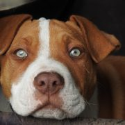 Should Pets be Adoptable in Pet Stores? | Hastings Veterinary Clinic