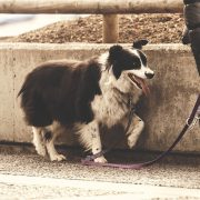 Emergency Tips to Use if Your Dog is Wounded on a Walk | Hastings Veterinary Clinic