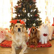 A Merry Christmas for Pets | Hastings Veterinary Hospital