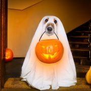 Happy 'Doggieween': Halloween Treats for Dogs Do's and Don'ts