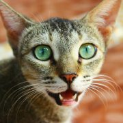The Importance of Pet Oral and Dental Care | Hastings Veterinary Clinic