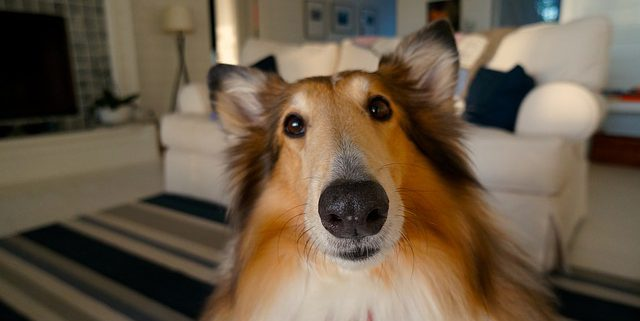 7 Fun Rainy Day Indoor Activities With Your Dog You'll Both Enjoy   Hastings Veterinary Hospital