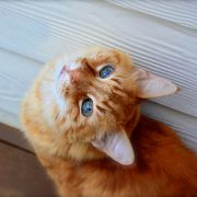 Call a Veterinarian If Feline Herpes Virus Strikes Kitty
