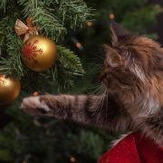 How to Keep Your Cat Happy and Safe During Christmas | Cat Care Tips | Hastings Veterinary Clinic