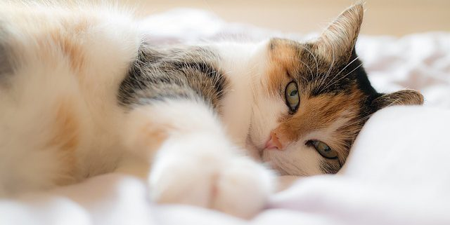 Cats Can Catch Colds Too! What to Do If Your Kitty is Sick