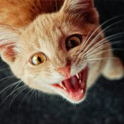 Cat Dental Care Tips & How to Clean Your Kitty's Teeth-Hastings Veterinary Clinic
