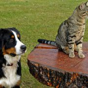 How to Prevent Pesky Parasites from Plaguing Pets & People | parasite control for pets | Hastings Veterinary Hospital
