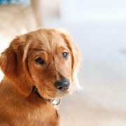 Things to Know about Ringworm in Dogs--Hastings Veterinary Clinic