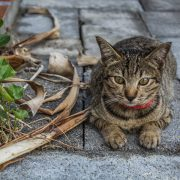 How to Reunite a Lost or Abandoned Cat with Its Owner | Hastings Veterinary Hospital