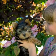 Puppy Care 101, Part 1: The First 0-8 Weeks | Hastings Veterinary Clinic