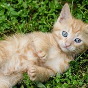 Ask an Expert: Catnip and Cats | Hastings Veterinary Hospital