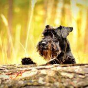 Dog Neutering & the Movember Movement | Hasting Veterinary Clinic