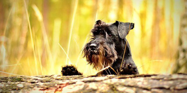 Dog Neutering & the Movember Movement   Hasting Veterinary Clinic
