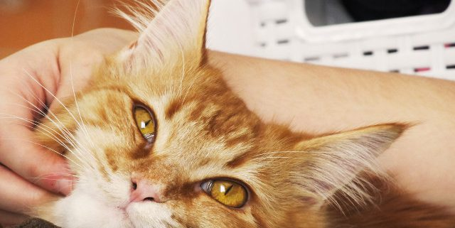 Common Mistakes to Avoid Making as a Cat Parent-Hastings Veterinary Hospital