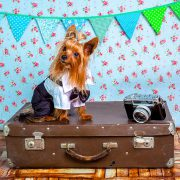How to Plan a Safe Trip with Your Dog this Summer | Hastings Veterinary Hospital