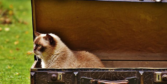 Planning a Trip? How to Treat a Cat with Travel Anxiety | Hastings Veterinary Clinic