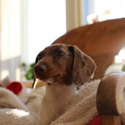 8 Ways to Prepare Your Home for a New Dog's Arrival | Hastings Veterinary Hospital