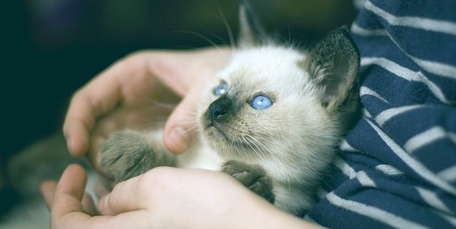 How to Prepare for Your Kitten's First Veterinary Appointment | Hastings Veterinary Clinic