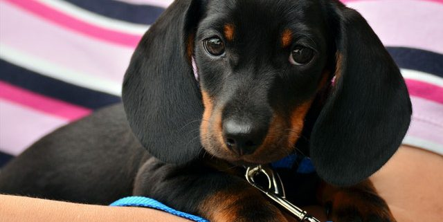 How to Get Ready for Your Puppy's First Veterinary Appointment   Hastings Veterinary Clinic