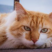 Older Cats Need Love, Too! 8 Reasons for Adopting One | Hastings Veterinary Clinic