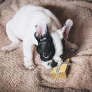 Great Gift Ideas for Pet Owners and Their Pets | Hastings Veterinary Clinic