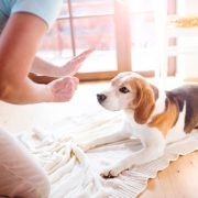 Good House Training and Crate Training Tips for Dogs   Hastings Veterinary Hospital