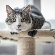 """Why Does My Cat Urinate Outside The Litter Box?"" 