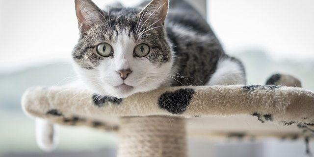 """""""Why Does My Cat Urinate Outside The Litter Box?"""" 