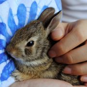 Adopting a Pet Bunny? Learn Rabbit Care 101 | Hastings Veterinary Hospital